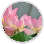 water lily 57 Pink Lotus Round Beach Towel