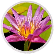 Water Lily After Rain Round Beach Towel