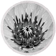 Water Lily B/w Round Beach Towel