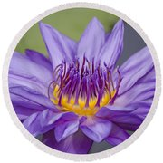 Water Lily Director George T Moore Round Beach Towel