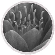 Water Lily Flame Bw Round Beach Towel