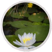 Water Lily IIi Round Beach Towel