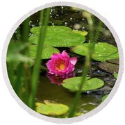 Water Lily In A Pond Round Beach Towel