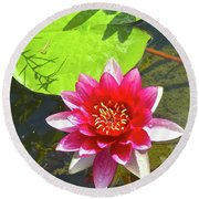 Water Lily In Pond Round Beach Towel