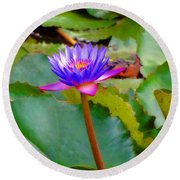 Water Lily In Tahiti Round Beach Towel