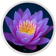 Water Lily Of The Dawn Round Beach Towel