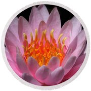 Water Lily On Fire Round Beach Towel