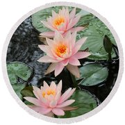 Water Lily Trio Round Beach Towel