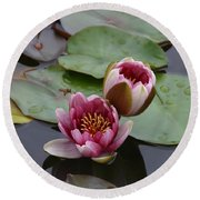 Water Lily With Bee Round Beach Towel