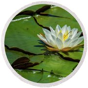 Water Lily With Friend Round Beach Towel