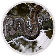 Water Moccasin Round Beach Towel