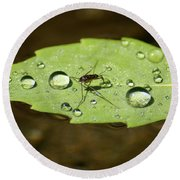 Water Strider Has A Drink At The Floating Leaf Cafe Round Beach Towel