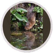 Water Vole Round Beach Towel