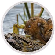 Water Vole Cleaning Round Beach Towel
