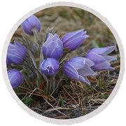 Watercolor Pasque Flowers Round Beach Towel
