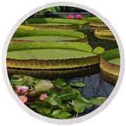 Waterlilies North And South Round Beach Towel
