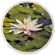 Waterlily On The Water Round Beach Towel