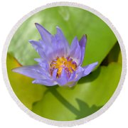 Waterlily Shadow Of Perfection Round Beach Towel