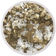 Waxleaf Privet Blooms On A Sunny Day In Sepia Tones Round Beach Towel