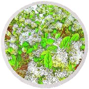 Waxleaf Privet Blooms On A Sunny Day Round Beach Towel