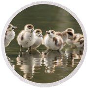 We Are Family - Seven Egytean Goslings In A Row Round Beach Towel