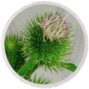 Weeds Can Be Beautiful Too Round Beach Towel
