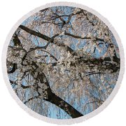 Weeping Cherry In Spring Round Beach Towel
