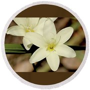 West Australian Wildflowers - Orchid 2 Round Beach Towel