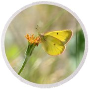 Wester Sulfur Butterfly Round Beach Towel