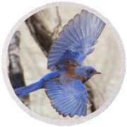 Western Bluebird 2 Round Beach Towel