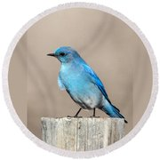 Mountain  Bluebird Round Beach Towel