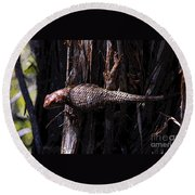 Western Fence Lizard Round Beach Towel