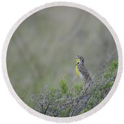Western Meadowlark Morning Round Beach Towel
