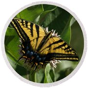 Western Tiger Swallowtail 2 Round Beach Towel