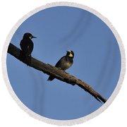 Western Woodpeckers Round Beach Towel