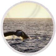Whale Fluke Round Beach Towel