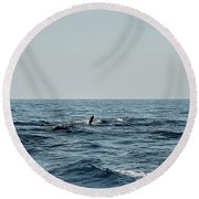 Whale Watching And Dolphins 2 Round Beach Towel