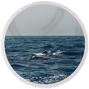 Whale Watching And Dolphins 3 Round Beach Towel