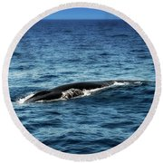 Whale Watching Balenottera Comune 3 Round Beach Towel