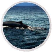 Whale Watching Balenottera Comune 6 Round Beach Towel