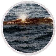 Whale Watching Balenottera Comune 7 Round Beach Towel