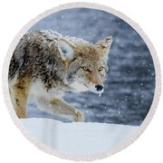 Where The Coyote Walks Round Beach Towel