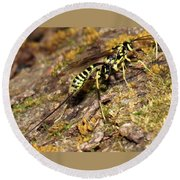 Whip Tailed Wasp Round Beach Towel