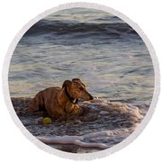 Whippet Cooling Off Round Beach Towel