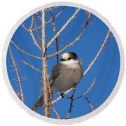 Whiskey Jack Perched On A Winter Larch  Round Beach Towel