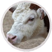 White And Brown Heifer Dairy Cow Round Beach Towel