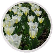 White And Pale Yellow Tulips In A Bulb Garden Round Beach Towel