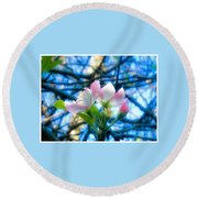 White And Pink Apple Blossoms Against A Blue Sky Round Beach Towel