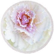 White And Pink Ornamental Kale Round Beach Towel