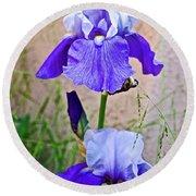 White And Purple Irises At Pilgrim Place In Claremont-california- Round Beach Towel